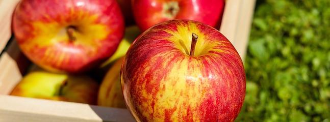 An Apple a Day: How to Celebrate World Apple Day!