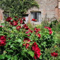 Red Rose Day: The UK's Top Rose Gardens
