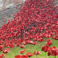 The Battle of the Somme Centenary: WW1 Events of Remembrance